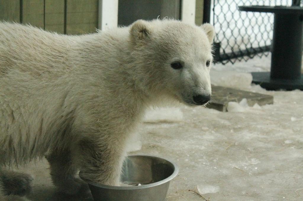 toronto zoo babies