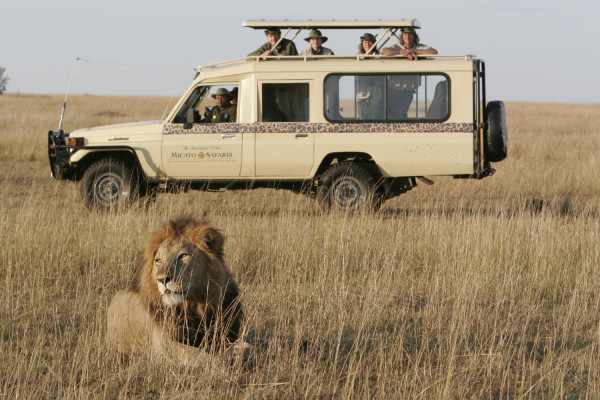 Micato safari vehicle and lion