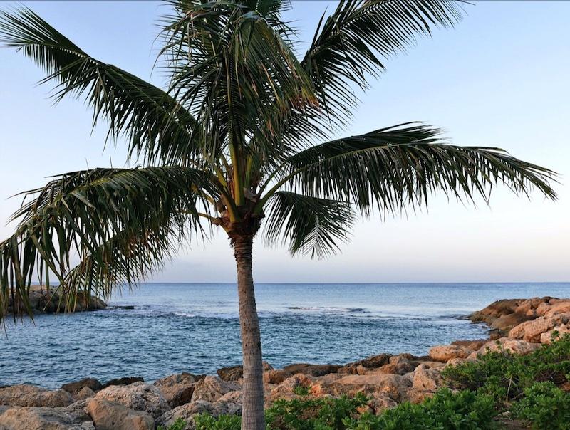 The Best Luxury Family Resorts In Oahu Hawaii Solo Mom Takes Flightsolo Flight